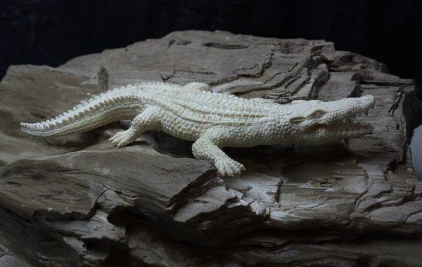 n:o65 Luukaiverrus: Krokotiili ( 1600€ )